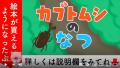 【絵本 読み聞かせ】夏休みの自由研究にカブトムシを育てよう!飼育方法も学べるしつけ要素のある昆虫採集の物語/カブトムシの夏(かぶとむしのなつ)